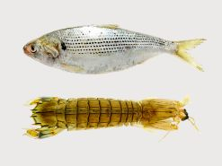 東京湾の魚はなぜうまい